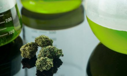 Marijuana Kills Cancer Cells, Admits US National Cancer Institute